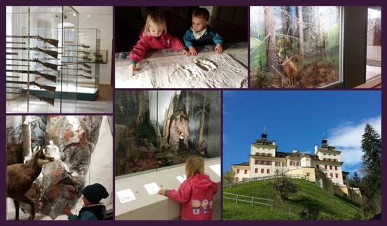 TUI Ferienhaus Melcherhof Südtirol Ratschings Familienurlaub im Test