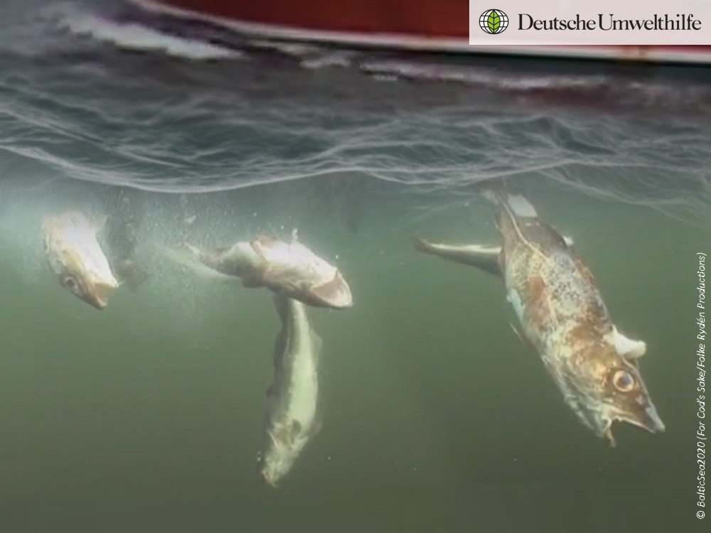 Petition gegen illegale Fischrueckwuerfe