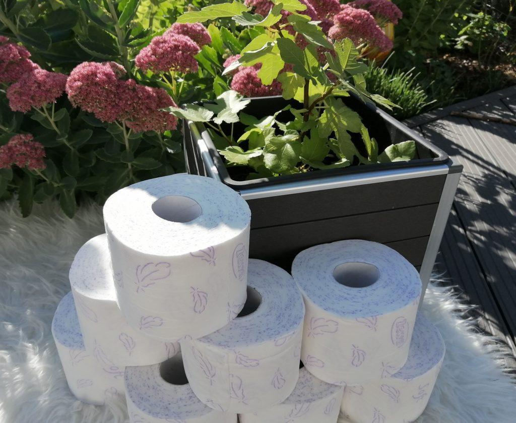 Zewa Zauberhafte Feige Toilettenpapier Erfahrung